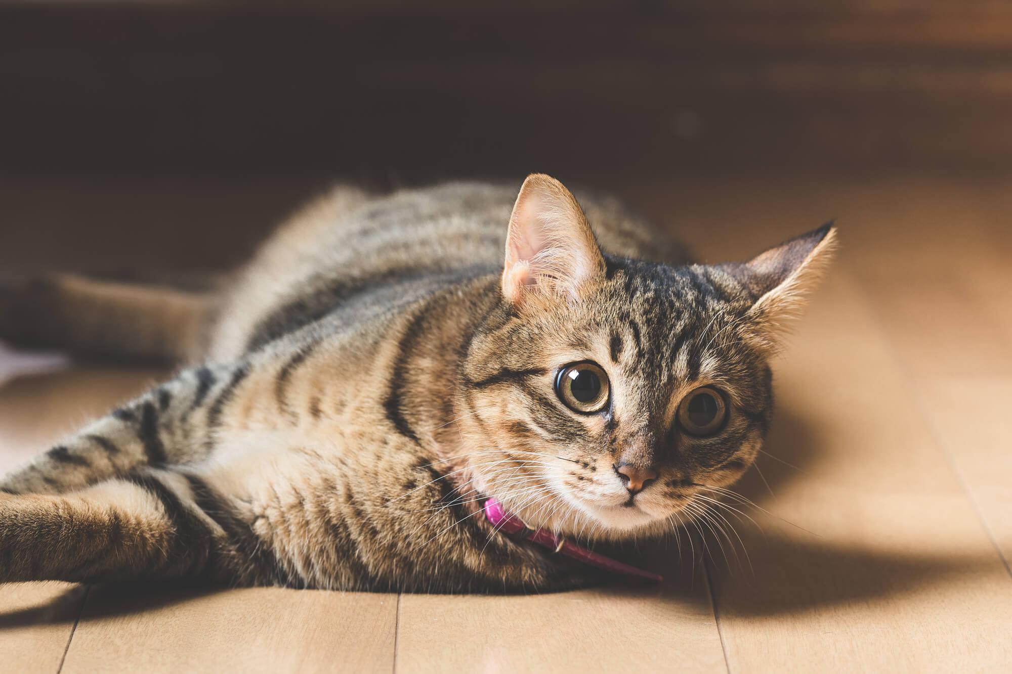 猫とマンションで暮らすときの5つの必需品と5つのポイントを解説