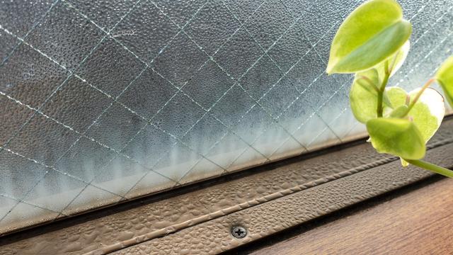 冬の窓の結露と観葉植物